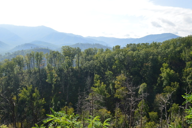 Gorgeous mountain views full of green treetops before the fall leaves began to change.