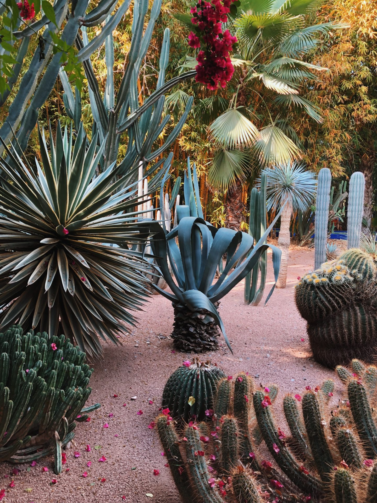 Every shape and style of Cactus imaginable at the Majorelle Gardens in Marrakech Morocco.
