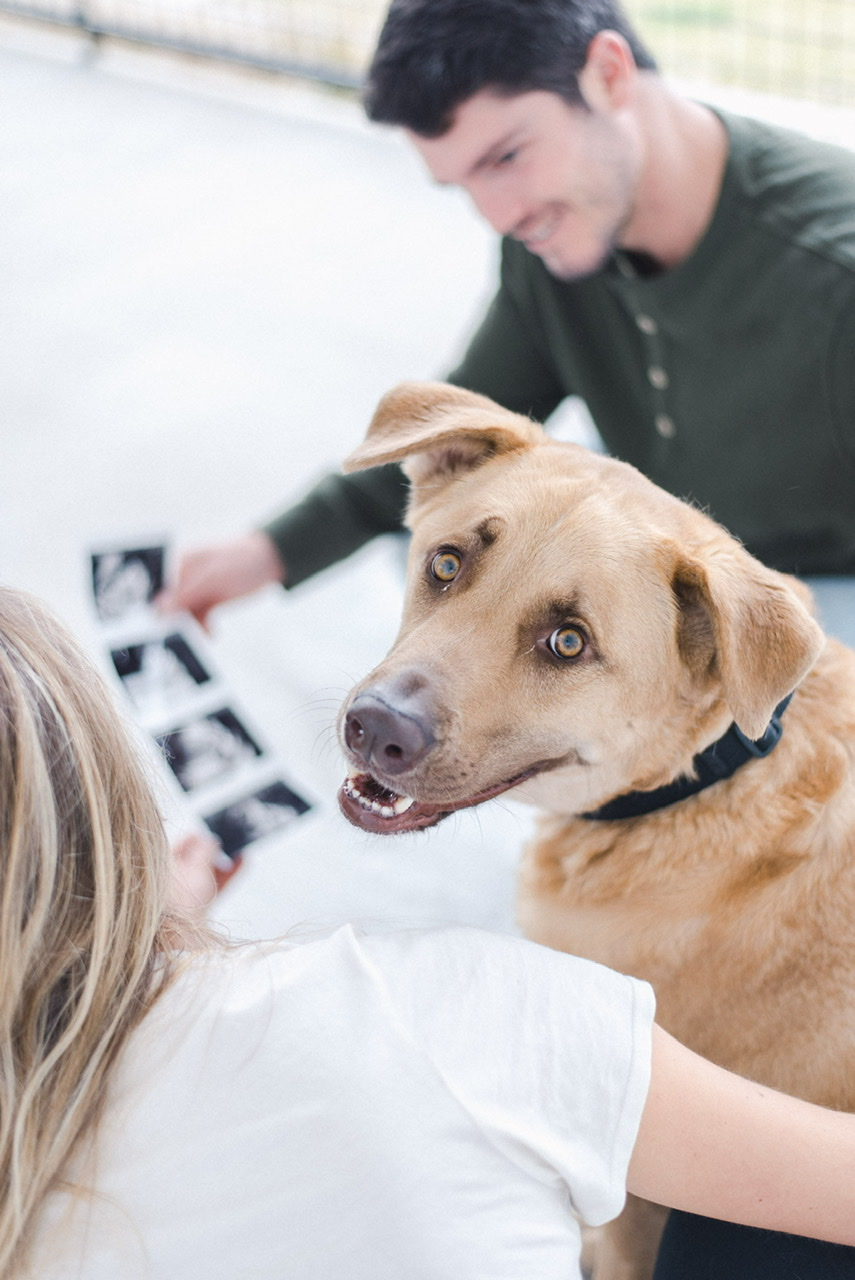 """Showing our first """"child"""" dog our ultrasound of his soon-to-be sister or brother!"""