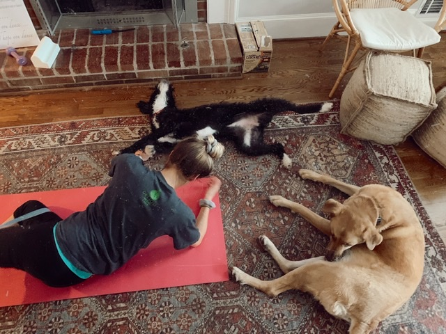 Attempting a workout at home with 2 dogs which explains how working out has went during pregnancy during covid!