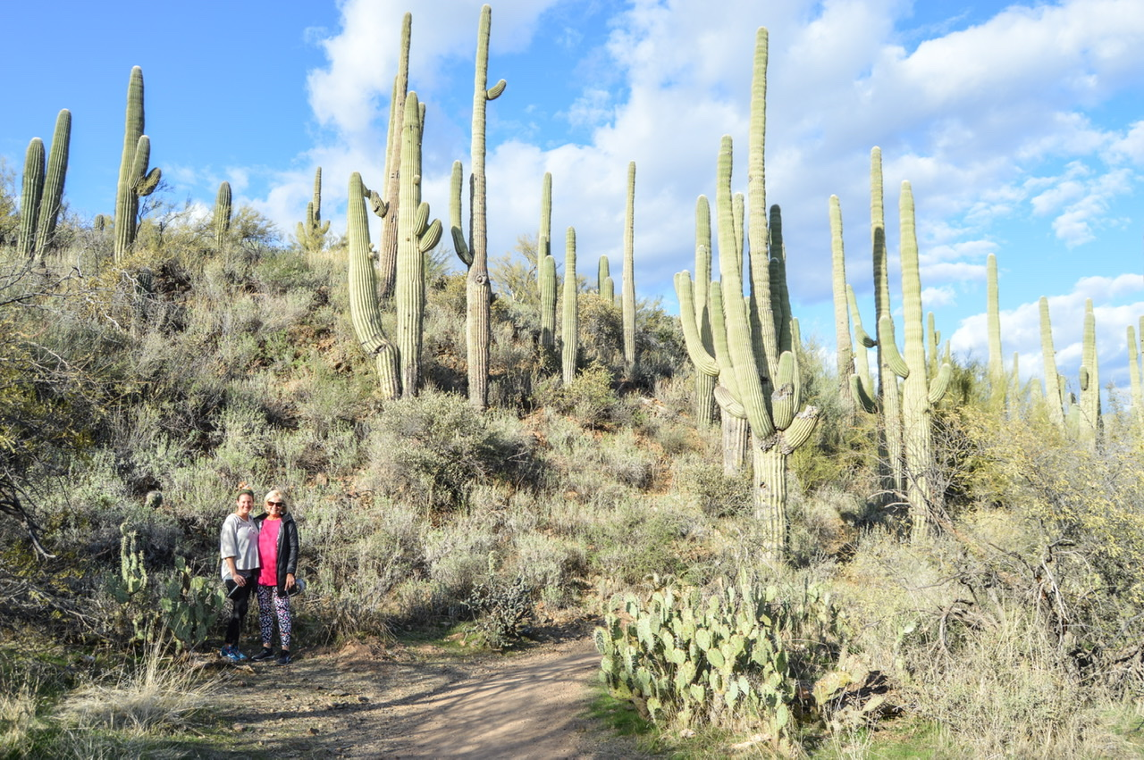 Absolutely stunning views of the Saguaro cactus in the Sonoran Desert during our Nature Immersion hike