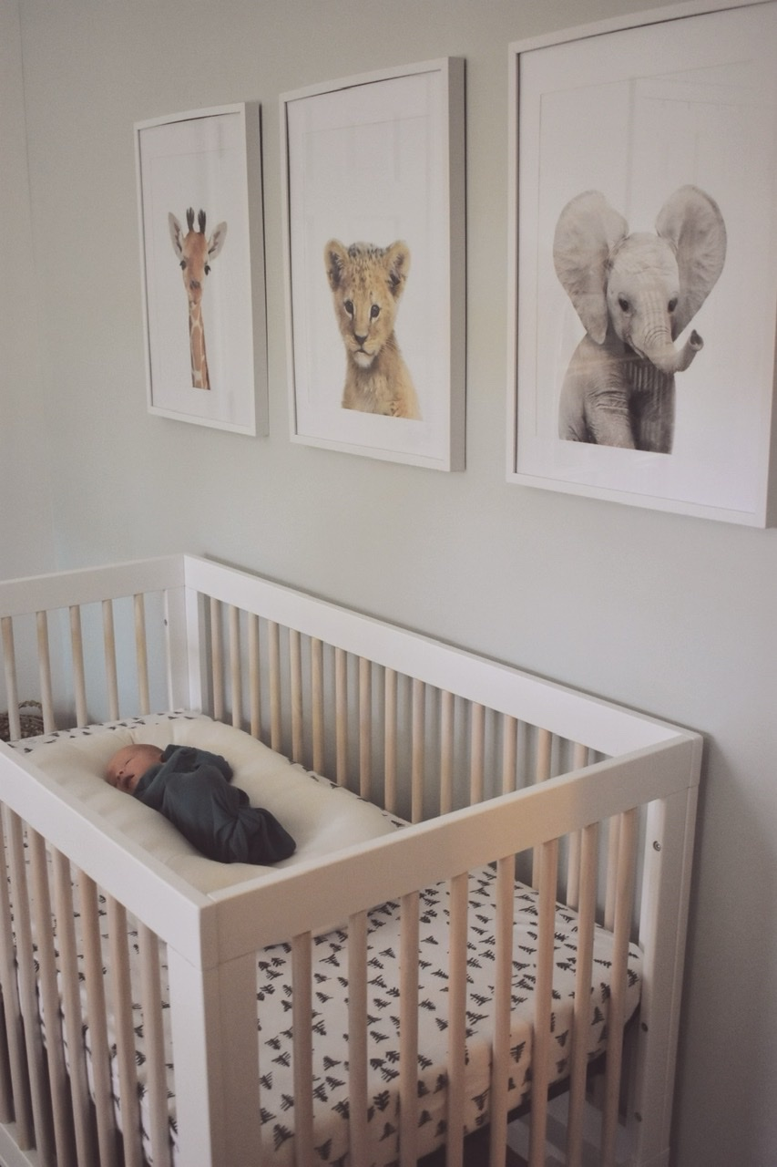 Our babyletto crib, animal themed safari and Snuggle Me Organic Infant Lounger